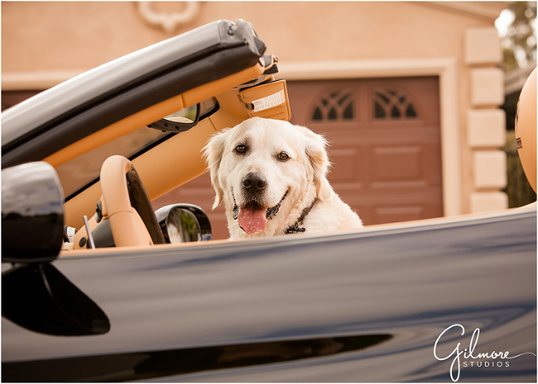 A One Year Old His Dog And Daddy S Ferrari Newport